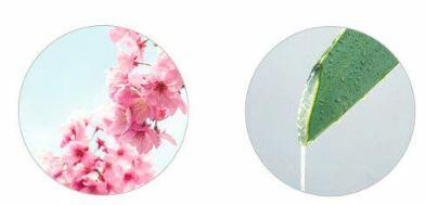 Holik Holika cseresznyevirág testápoló